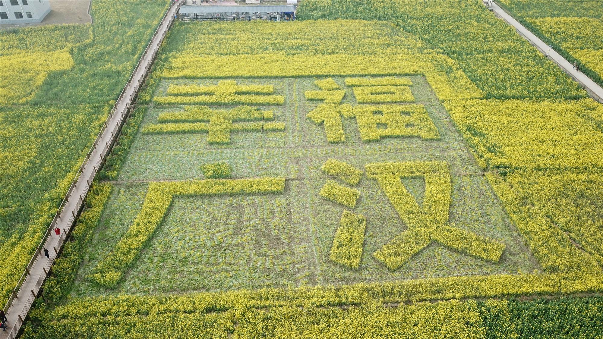 坐热气球乘滑索 广汉西高邀您高空看万亩油菜花
